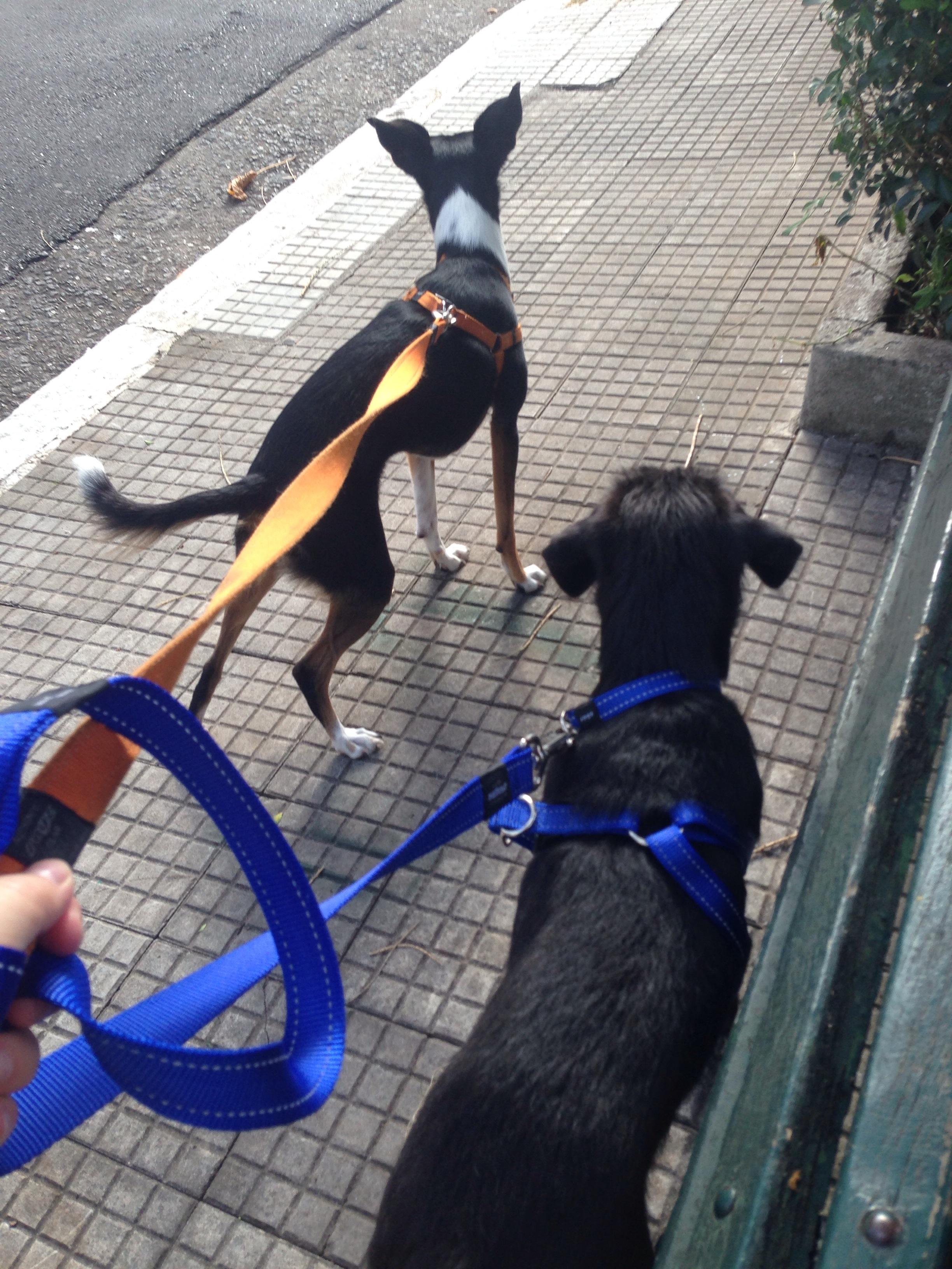 Quando Uma Cachorra Pega Cria Img